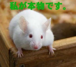 Realmouse105419