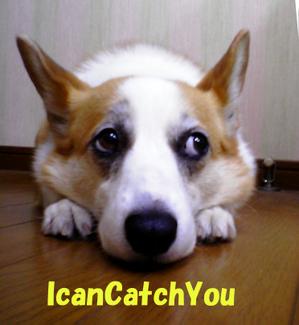 Icancatchyousa270008