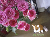 Roseandmarop1010633_2